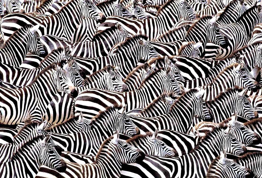 The theory of happiness. The law of a zebra and another's turn