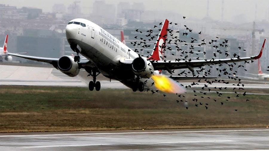 Автономные дроны будут отгонять стаи птиц от аэропортов