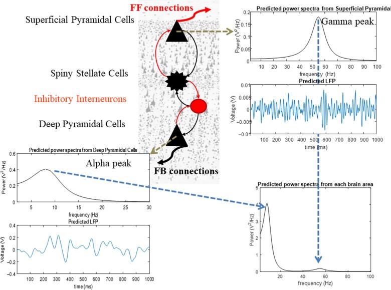 При перегрузке рабочей памяти у человека нарушается синхронизация между тремя отделами мозга