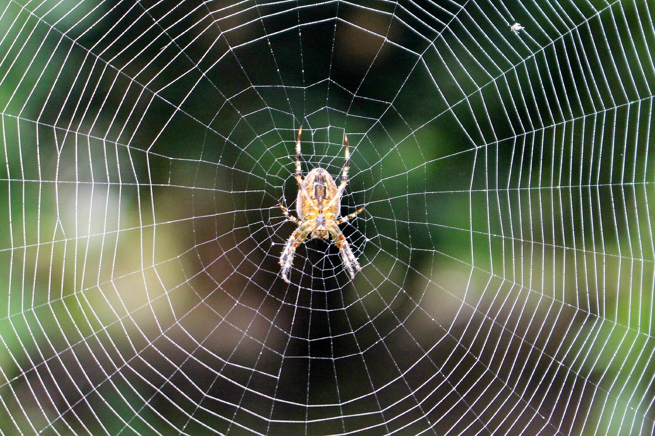 Паук для паутины или центральный узел распределенной сети