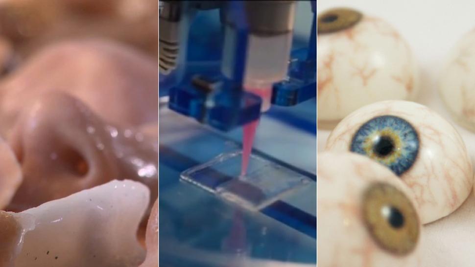 [Перевод] Как с помощью 3D-принтеров печатают кости, сосуды и органы