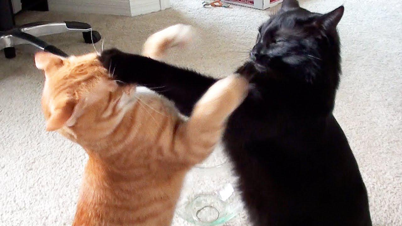 Дж. Х. Рейнвотер «Как пасти котов»: не надо так, или негативные паттерны в руководсте