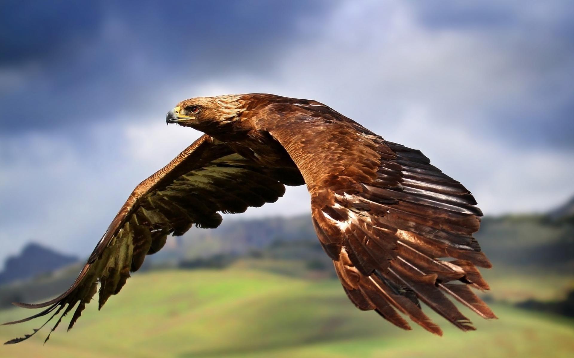 Не препятствие, а подспорье турбулентность и птицы