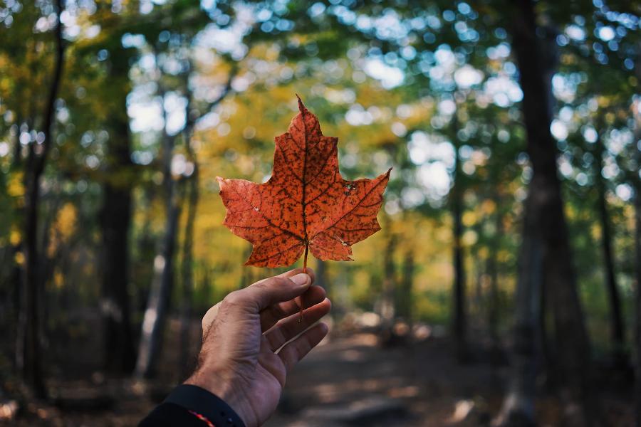Переезд IT-специалиста в Канаду процесс релокации и стоимость жизни