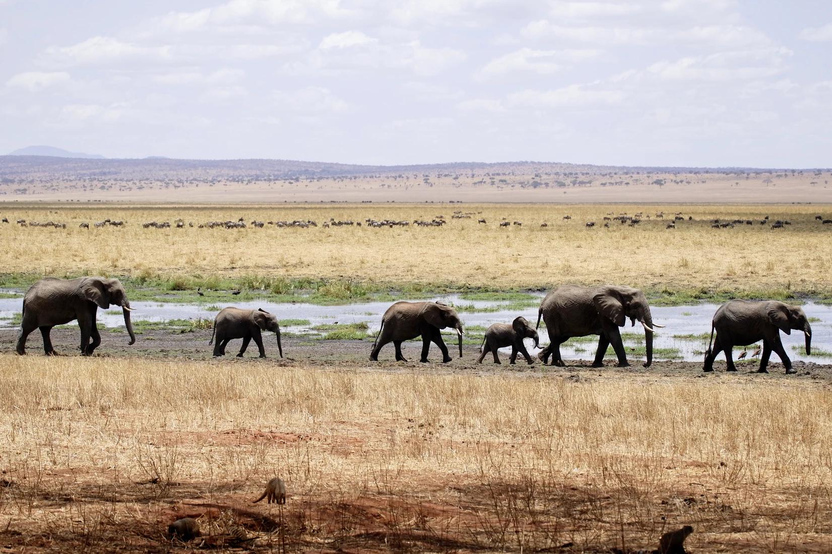 И тебя посчитают: ИИ помогает считать слонов со спутника на орбите