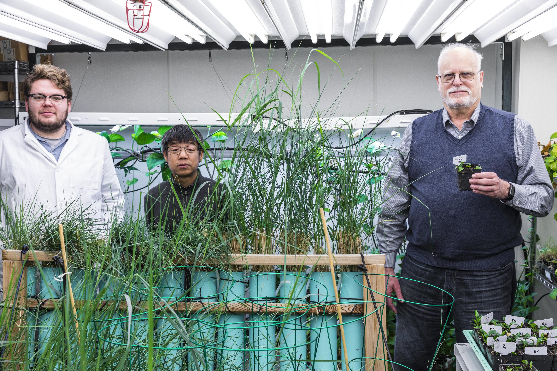 Ученые разработали ГМО-растение, способное удалять канцерогены из воздуха