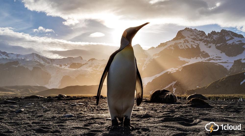 Исследование: Linux — все еще самая популярная ОС в облаке
