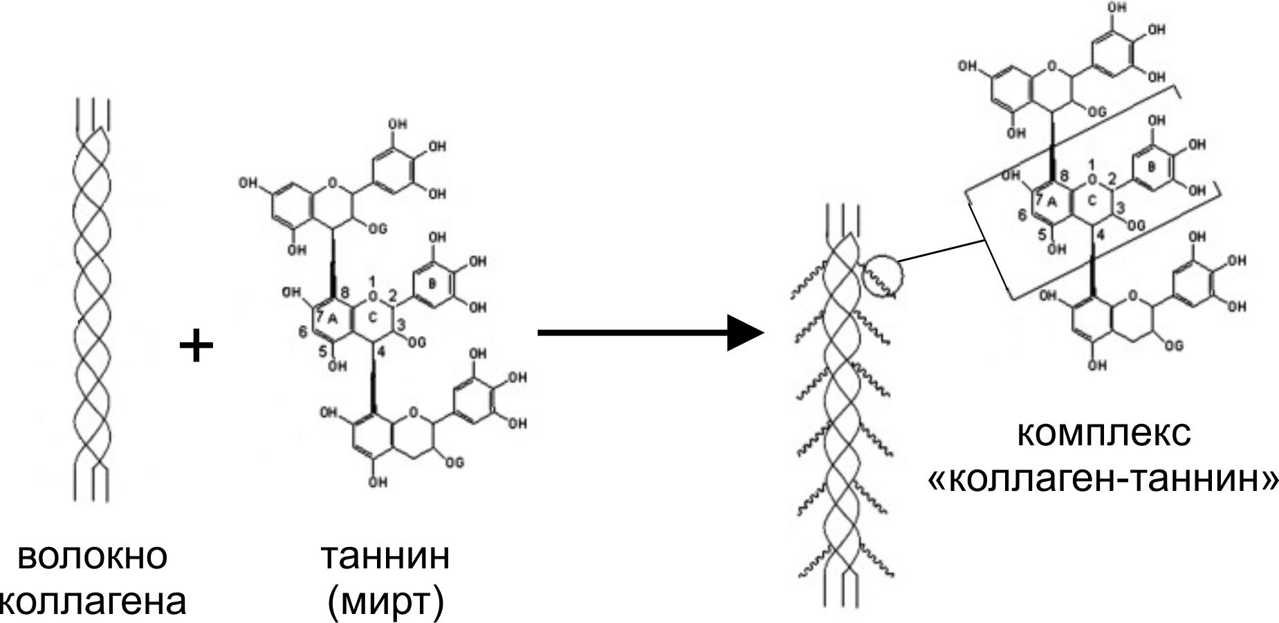 Биохимия и жизнь, или Следствие ведет биохимик