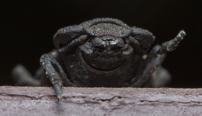 Спасительный пазл механика экзоскелета дьявольского жука