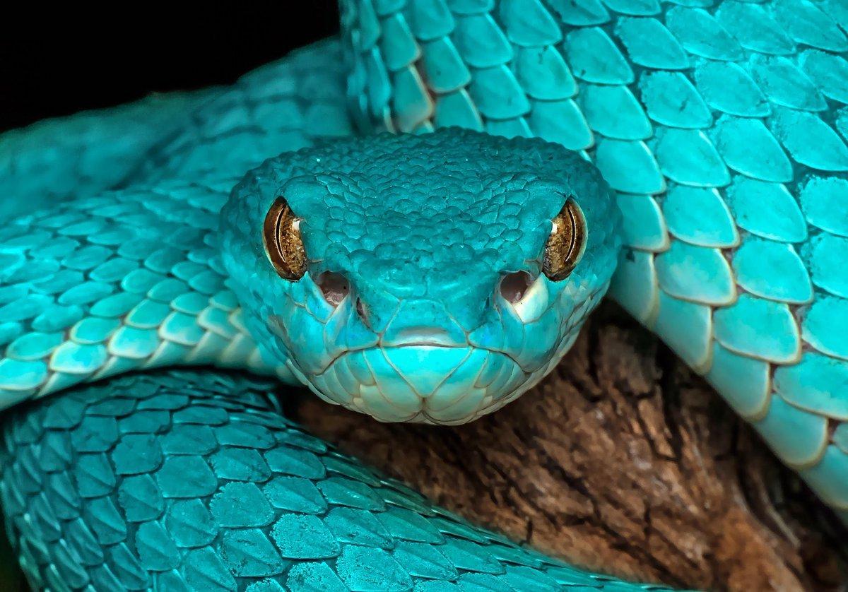 Разнообразие смерти гастрономические предпочтения змей и эволюция их яда