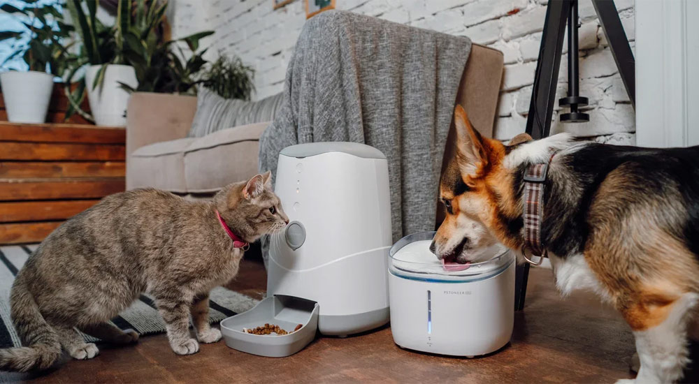 Кота и пса накормит робот