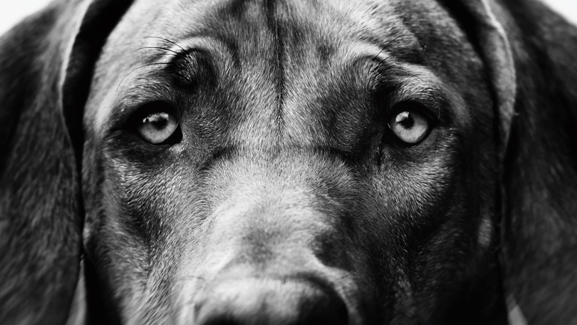 «Щенячьи глазки»: 30 000 лет коэволюции собаки и человека