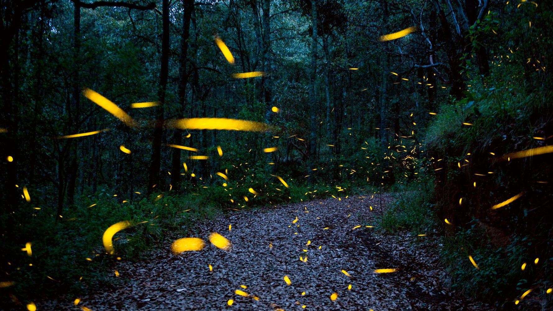 Танец света секрет синхронизации светлячков