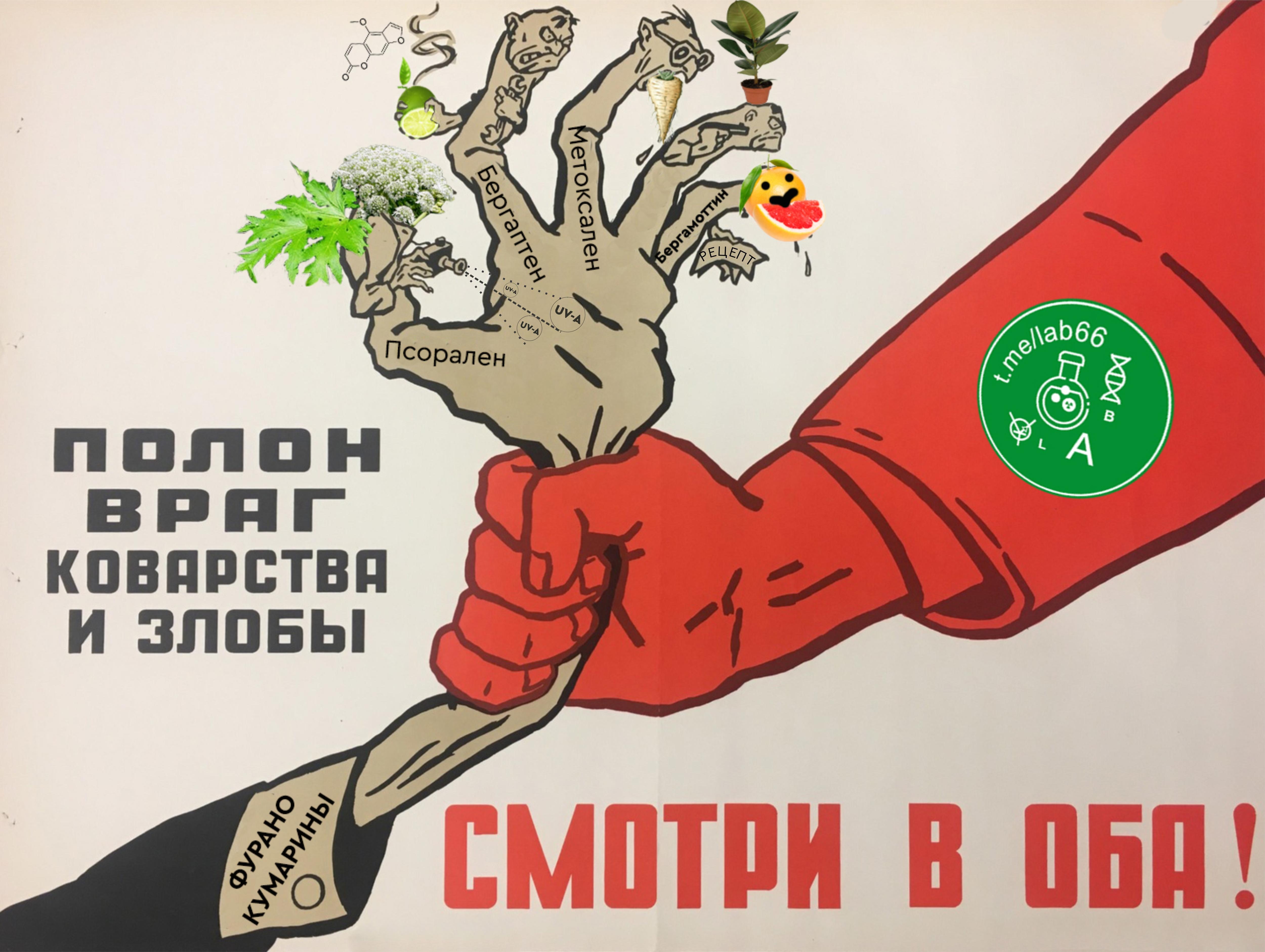 Заметки фитохимика 2021. БОРЩЕВИК