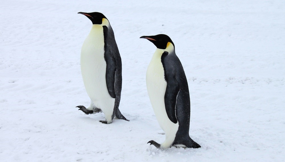 Ситуация: закрыты две уязвимости в TCP-стеке ядра Linux